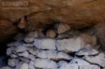 Общество «Московские древности» в Сьянских каменоломнях 2