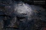 Общество «Московские древности» в Сьянских каменоломнях 5